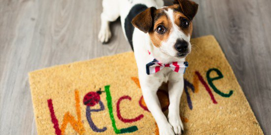 Buy Puppies & Pet Supplies - My Next Puppy Chantilly, Virginia