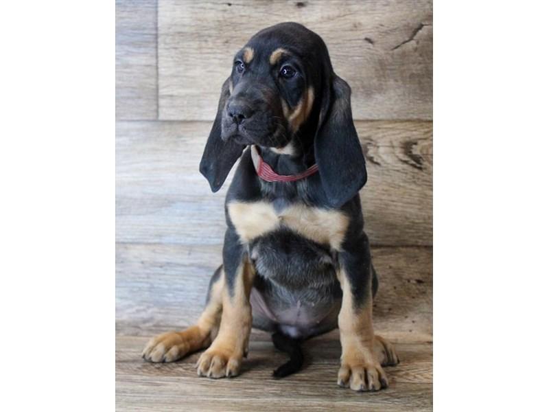 Bloodhound – Flurry